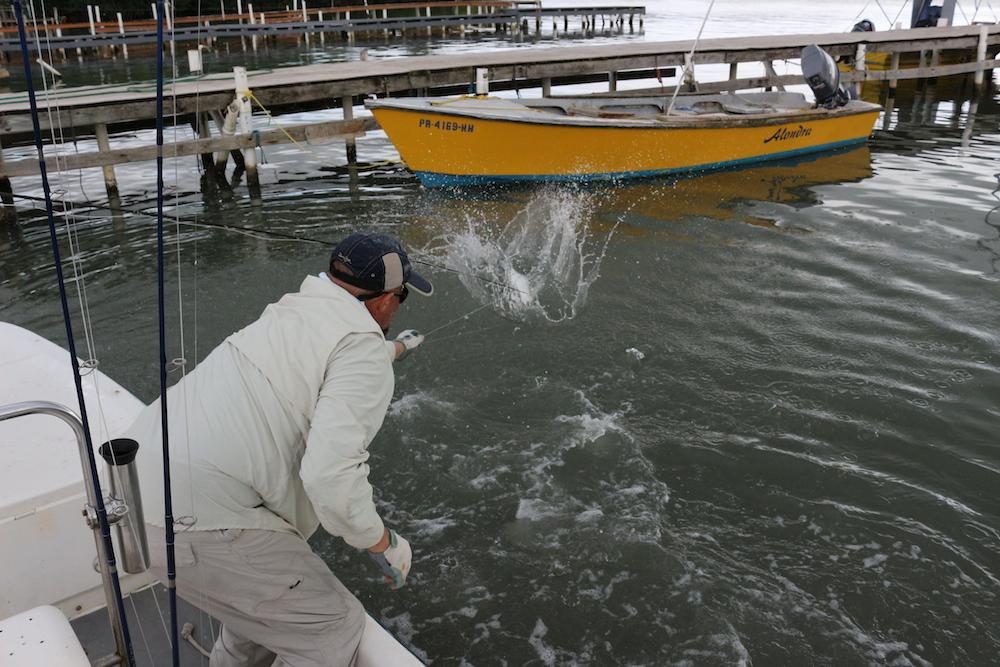 Photo chris windram for Fly fishing puerto rico