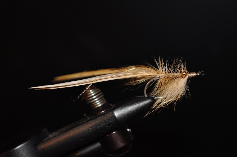 Little Brown Fly